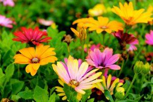 tuin aanpakken