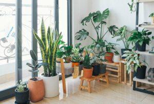 botanische inrichting