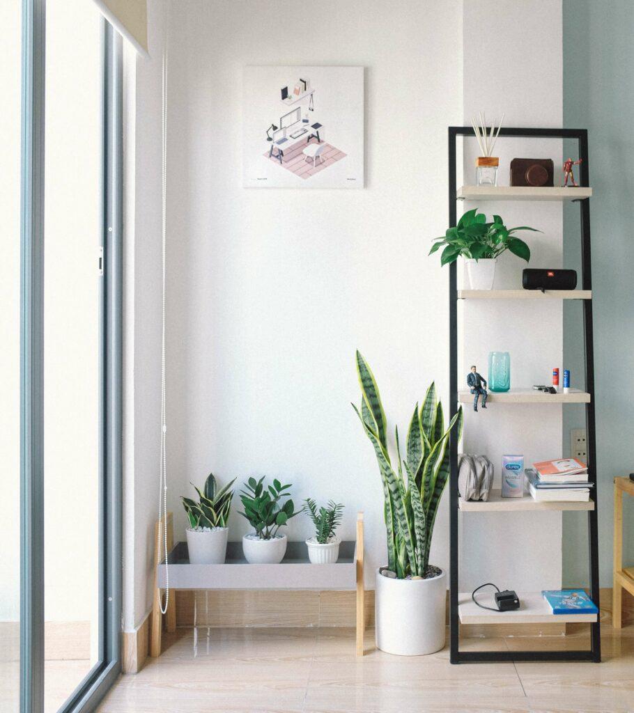 kamerplant woonkamer